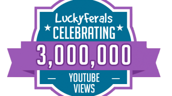 Celebrating 3 Million Video Views On YouTube!