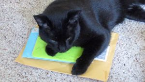 Boo Day 280 - Mail Time, Tractor Supply Haul, Spring Feral Cat Shelter Cleaning