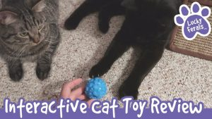 Grreat Choice Interactive Cat Treat Ball Review - Boo Gets His First Father's Day Present Ever