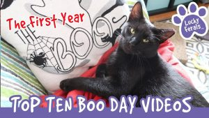 TOP 10 Most Viewed BOO DAY Videos! Year 1 Training And Socializing A Feral Cat