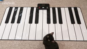 Boo Wants To Learn To Play Jazz On His Piano #blackcatlove