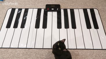 Black Cat With His Piano
