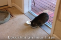 feral cat comes inside