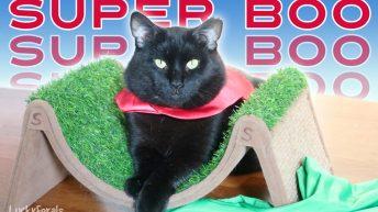 I heart Super Boo! Black Cat Superhero #blackcatlove #blackcatmonth