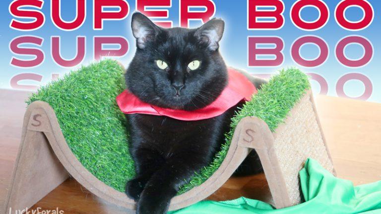 Super Boo The Black Cat Superhero