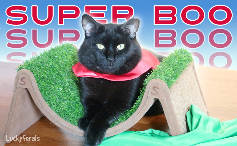 Super Boo The Black Cat Superhero