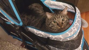 Boo Year 2 # 35 - A Vet Appointment For Boo, Catit Flower Fountain, Simba In The Cat Stroller