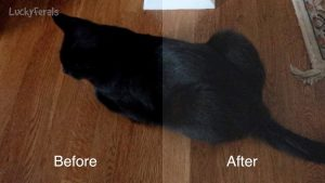 Quick And Easy Way To Make Black Cats More Visible In Videos And Photos