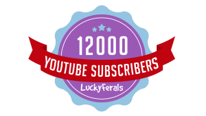 Lucky Ferals Has Just Reached 12,000 YouTube Subscribers!