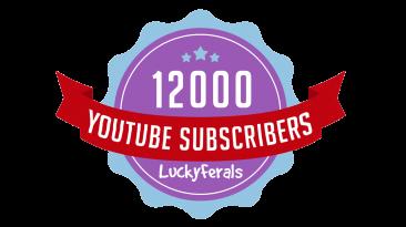 12k Subscriber Banner