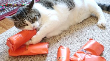 cat opening presents