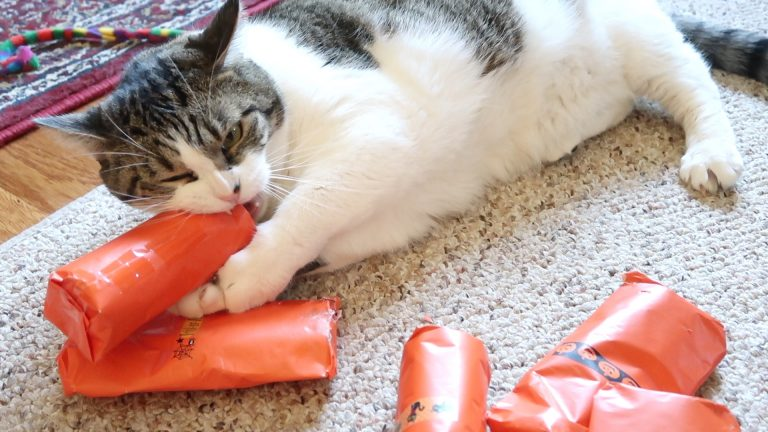 cat opening presents