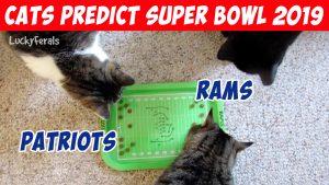 Super Bowl 2019 Predictions