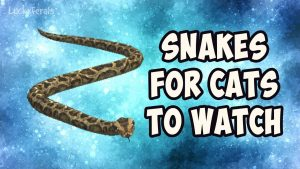 Video For Cats To Play - Snakes For Cats To Watch