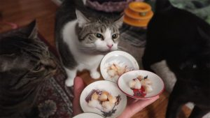 Boo Year 2 # 145 - Do Cats Like Shrimp? Cats Try Shrimp For The First Time