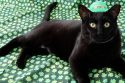 St Patricks Day Cats Compilation