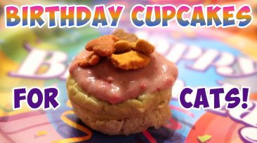 Birthday Cupcakes For Cats