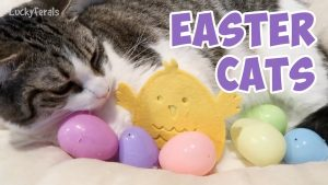 Easter Cats Compilation 2019 - Happy Easter Everyone!
