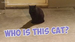 Boo Year 2 # 174 - Grandma Feral Fed The Cats, A Cake For Splash And Simba, Mystery Cat On The Patio
