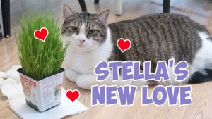 Boo Year 2 # 175 - Stella Loves The Cat Grass, Mail Time, A Birthday Gift Bag