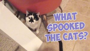 Boo Year 2 # 178 - Grandma Feral Cat Sitting, McKay's Used Books Nashville, What Spooked The Cats?
