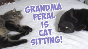 Boo Year 2 # 179 - Grandma Feral Cat Sitting, A Beautiful Day In Nashville, Splash Out Of Hiding