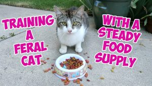 Training A Feral Cat In The Back Yard With A Steady Food Supply And Flower Tour