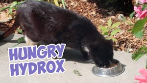 Boo Year 2 # 206 - Hungry Hungry Hydrox, By The Back Door All Night