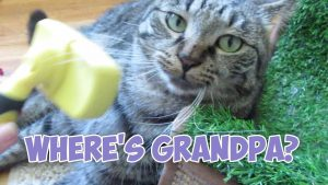 Boo Year 2 # 186 - Grandma Feral Cat Sitter, Hangry Stella, Simba Where's Grandpa?