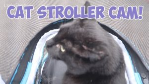 Boo Year 2 # 196 - Cat Stroller Training And A Cat Stroller Cam