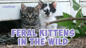 Feral Kittens In The Wild And Mother Cat - Splash And Simba Baby Cat Videos