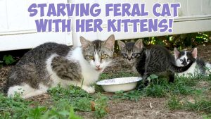 Starving Feral Cat With Her Kittens! - Training Feral Cats and Feral Kittens