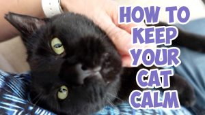 keep your cat calm
