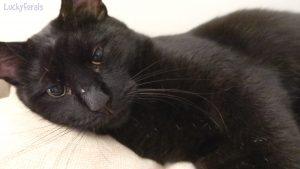 Hello Boo - Cute Black Cat