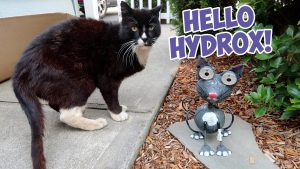 hydrox and the solar cat