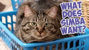 Simba In The Blue Bed Thumbnail