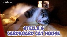 stella laying in her cardboard cat house