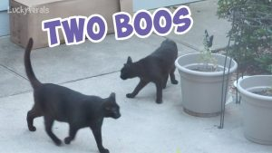 Boo Year 2 # 229 - Two Boos, A Popsicle Treat For The Cats - Cat Family Vlog
