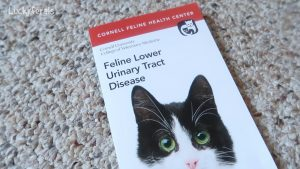 Decoding FLUTD - Feline Lower Urinary Tract Disease
