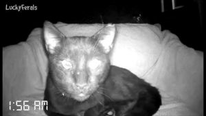 What Does A Feral Cat Do At Night? How Much Does A Feral Cat Sleep? Cat Caught On Camera