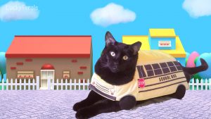 The Wheels On The Bus - Cat In Costume - Happy Halloween!