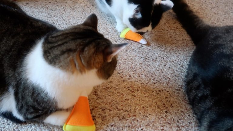 Halloween Candy Corn Cat Toys