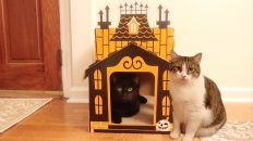 Target Haunted Mansion Cat Scratcher