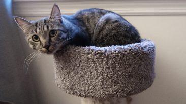 teenage cat