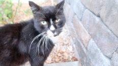 feral cat hydrox