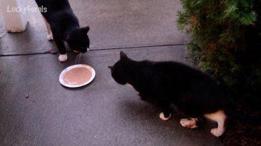 cat food mukbang