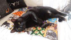 black cat sleeping on sofa