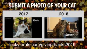Submit A Photo Of Your Cat For The Lucky Ferals' Thanksgiving Special