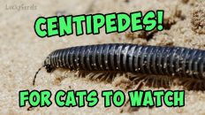 centipedes video for cats to watch