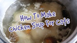 How To Make Homemade Chicken Soup For Cats - Chicken Broth For Cats Recipe